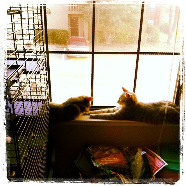 windowcats