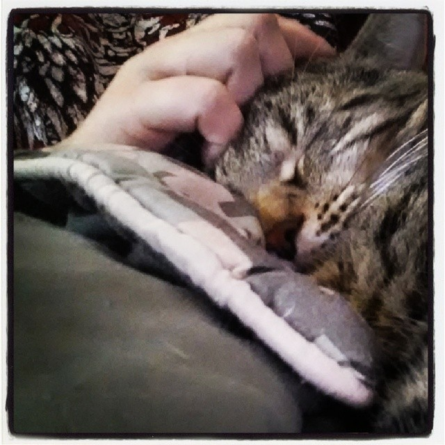 Snow a tabby bengal cat is being petted by his owner while sleeping against a military digital camo blanket.